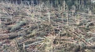 bosco veneto
